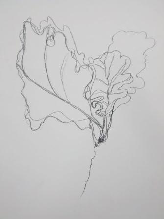 Rhiannon Evans continuous line drawing